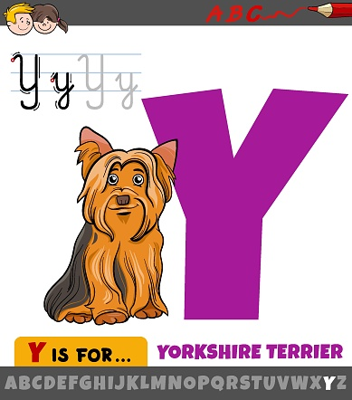 letter Y from alphabet with cartoon Yorkshire terrier