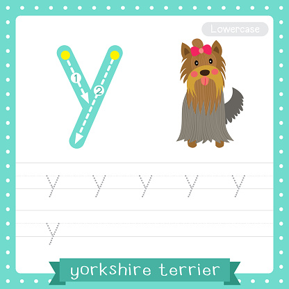 Letter Y lowercase tracing practice worksheet of Yorkshire Terrier dog