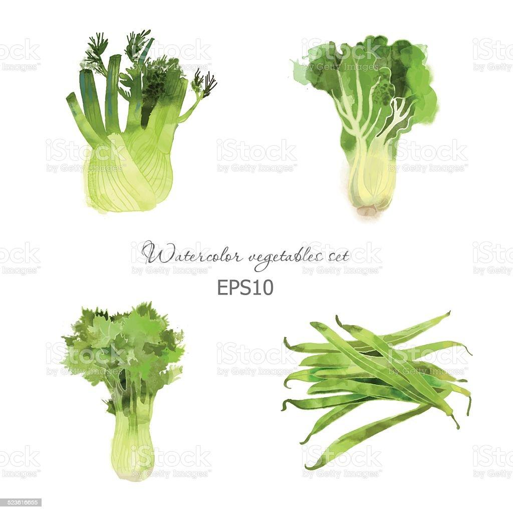 lettuce, celery, fennel, bean vector art illustration