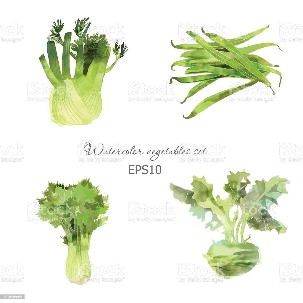 lettuce, fennel, bean, kohlrabi vector art illustration