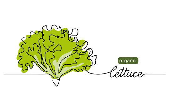 Lettuce, green leaves, bunch of salad vector illustration, background. One line drawing art illustration with lettering organic lettuce.