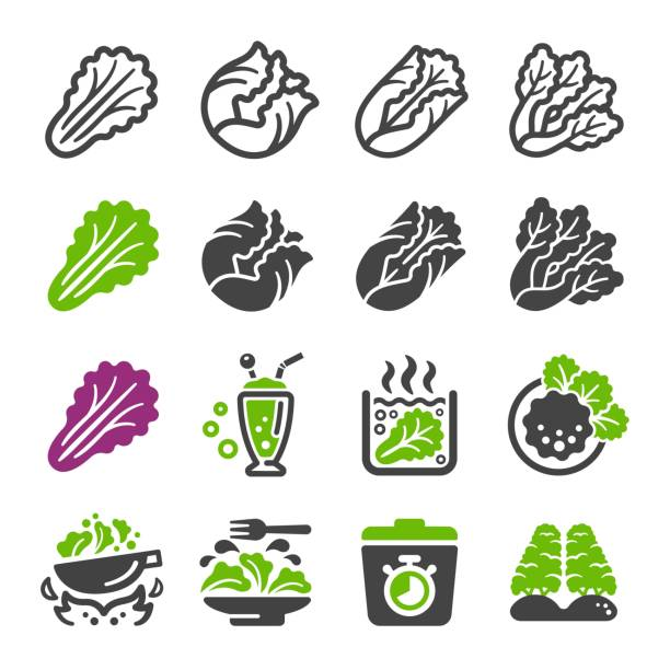 lettuce icon set - lettuce stock illustrations
