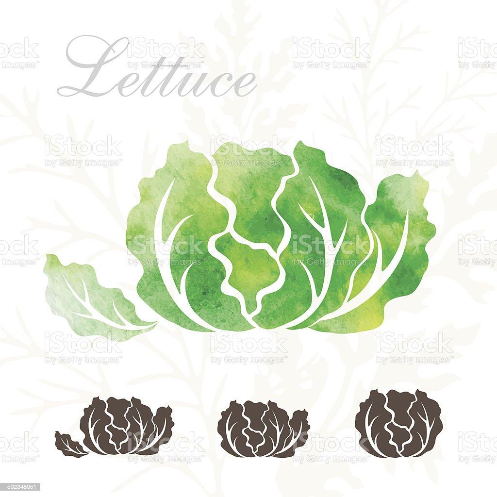 Lettuce icons set. vector art illustration