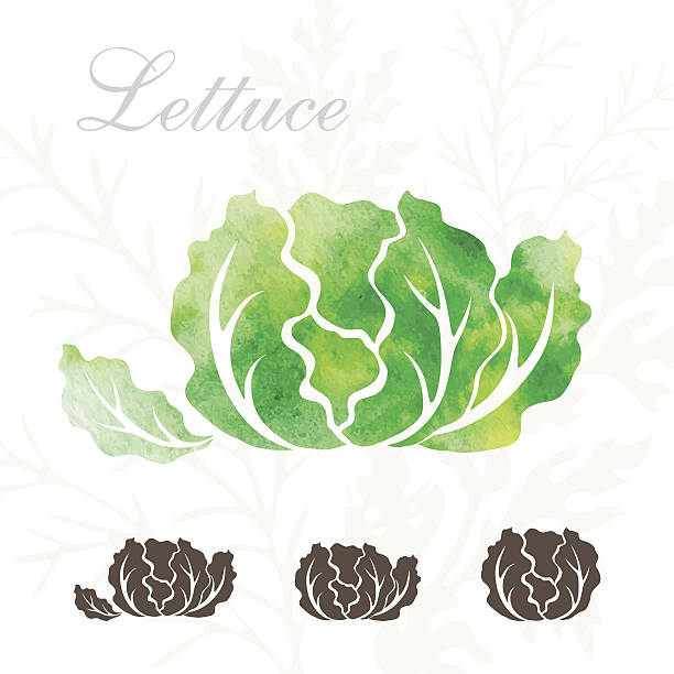 lettuce icons set. - lettuce stock illustrations