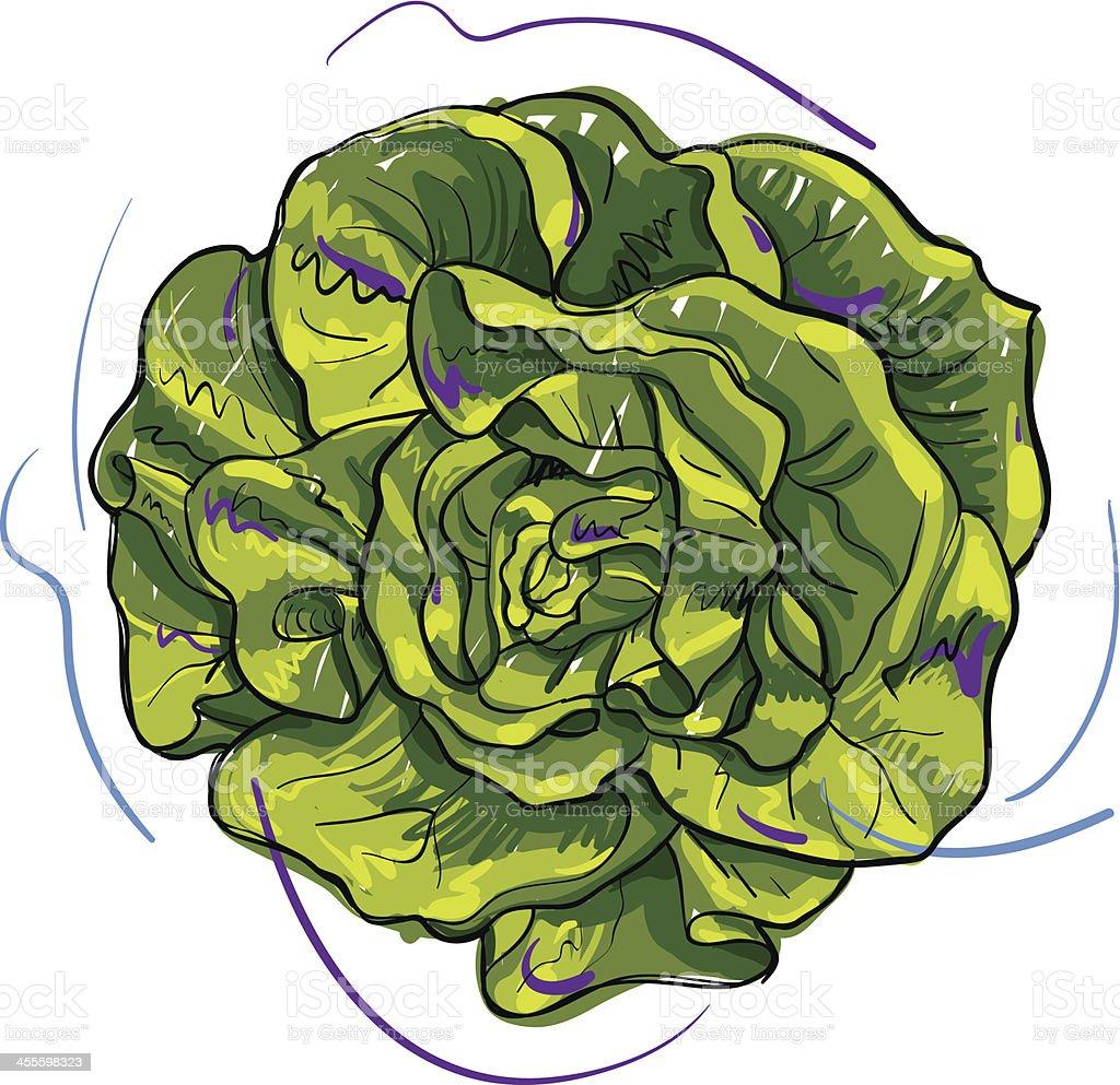 Lettuce sketch vector art illustration