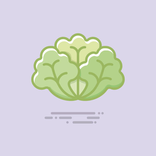 lettuce vegetable filled line vector icon - lettuce stock illustrations