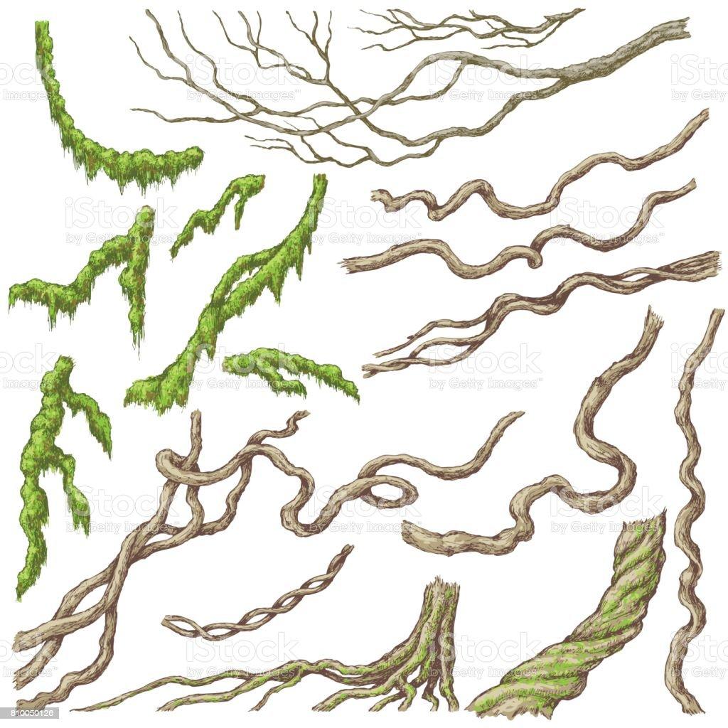 Liana ramos Sketch - ilustração de arte em vetor