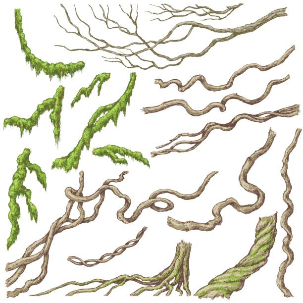 Liana Branches Sketch Hand drawn branches and leaves of tropical plants. Liana and moss-covered twigs isolated on white. Vector sketch. moss stock illustrations