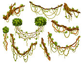 Liana or jungle plant or vine wild greenery winding branches vector stem with leaves isolated decorative elements. Tropical vines rainforest flora and exotic botany wild curling species and twigs.