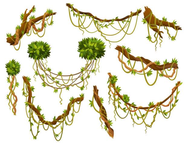 리아나 또는 정글 식물 또는 포도 나무 야생 녹지 권선 가지 벡터 줄기 잎 고립 된 장식 요소 열대 포도 나무 열대 우림 식물과 이국적인 식물 야생 컬링 종과 나뭇 가지 - jungle stock illustrations