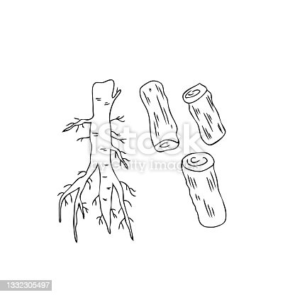 istock Licorice sticks root set vector hand drawn illustration isolated on white background, ink sketch, decorative herbal line art doodle, medical herb for design cosmetic, natural medicine, organic food 1332305497