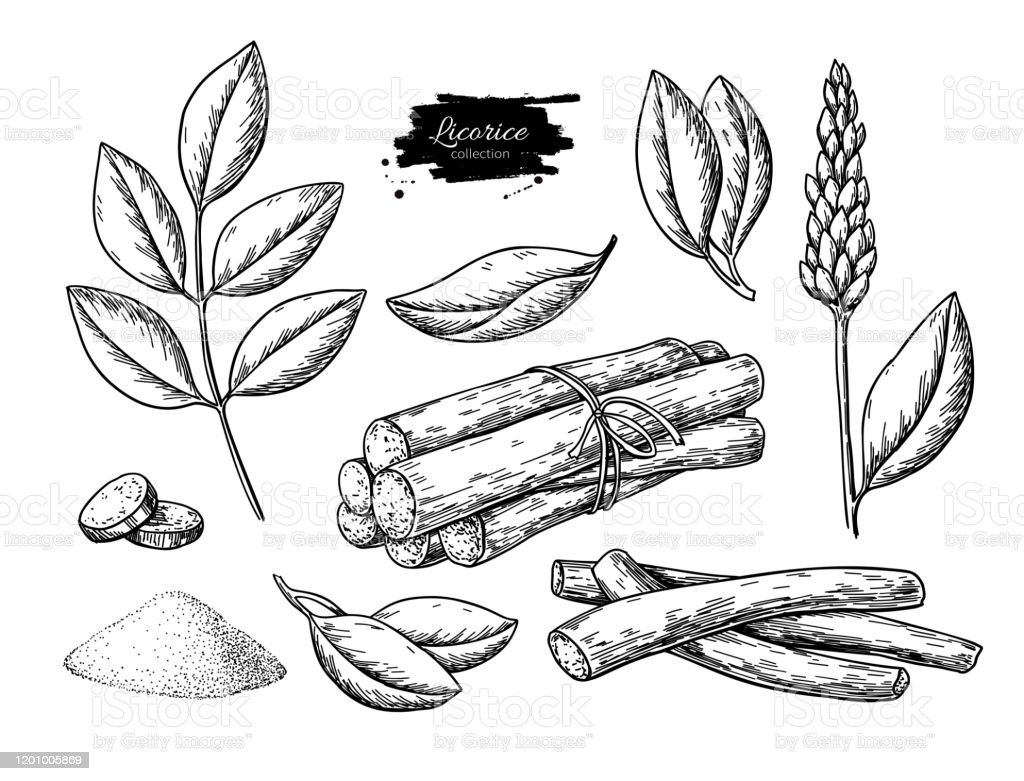 Licorice Vector Drawing Bunch Of Roots Plants Branch With Flower And Leaves Pile Of Ground Powder Stock Illustration Download Image Now Istock