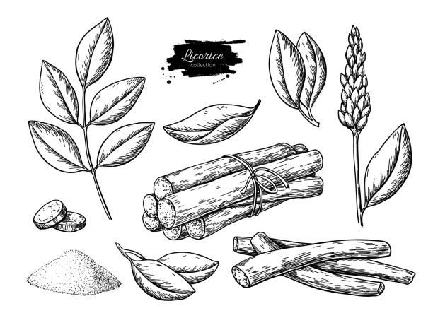 illustrazioni stock, clip art, cartoni animati e icone di tendenza di licorice vector drawing. bunch of roots, plants, branch with flower and leaves. pile of ground powder. - liquirizia