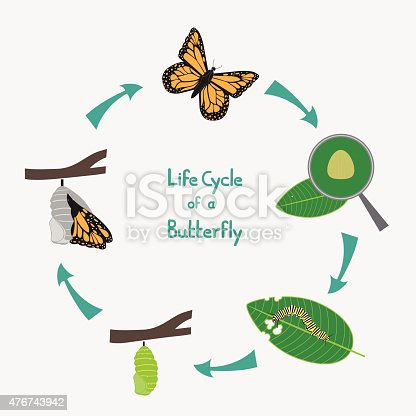 butterfly and mosquito life cycle Articles - information about butterflies, caterpillars & plants the mysteries of life november 2008 by regina cutter edwards butterflies go through four stages in life that are considered to be great mysteries the pupa stage of the butterfly's life cycle is a time for complete change.