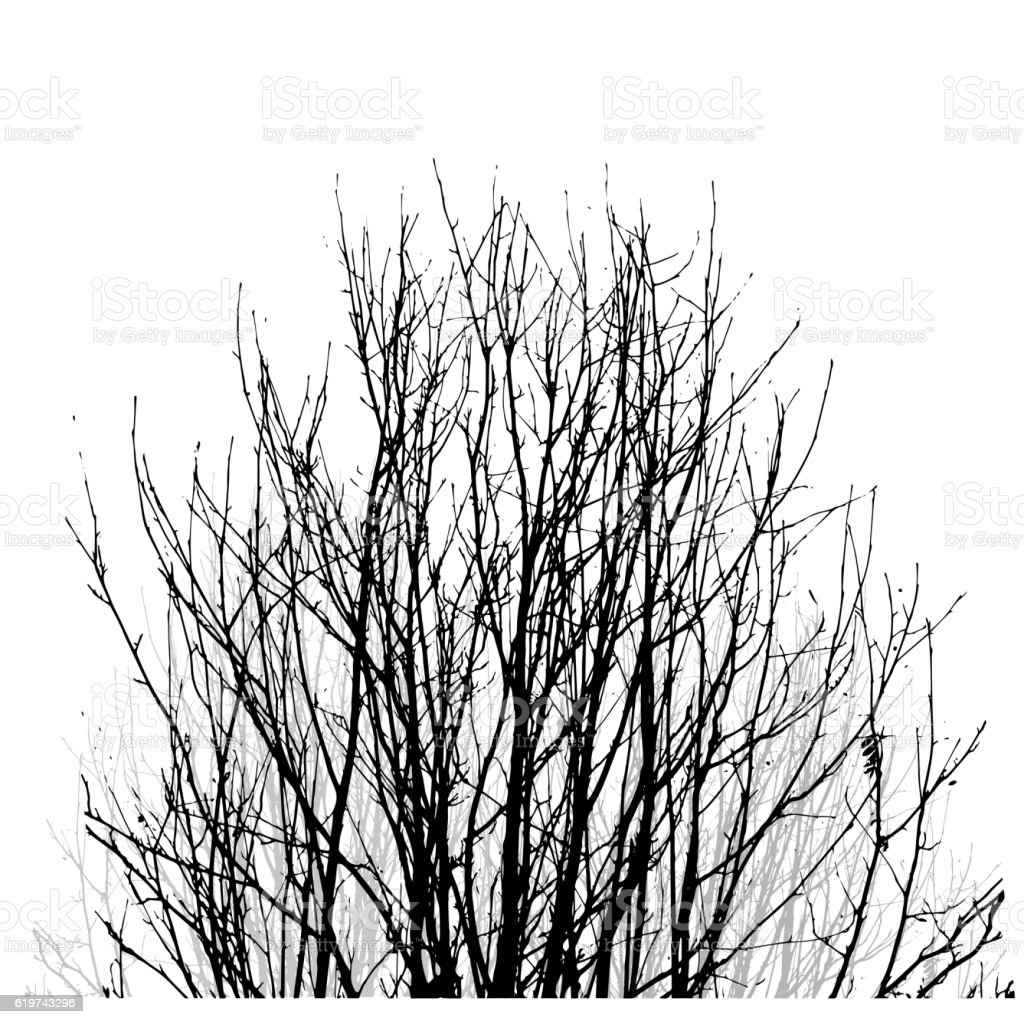 Lifeless naked bush vector art illustration