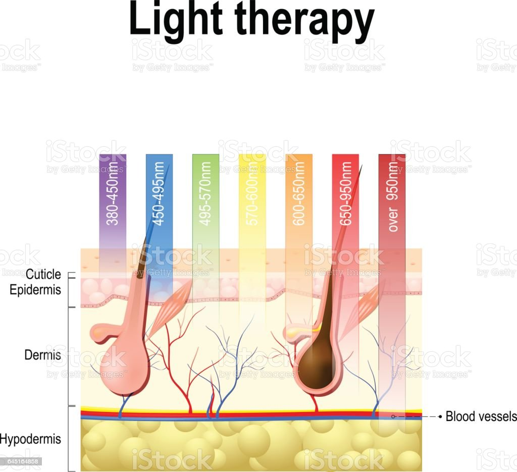 light therapy, Phototherapy or laser therapy. Depth of penetration by wave light vector art illustration
