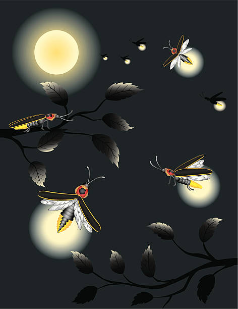 Best Firefly Illustrations, Royalty-Free Vector Graphics ...