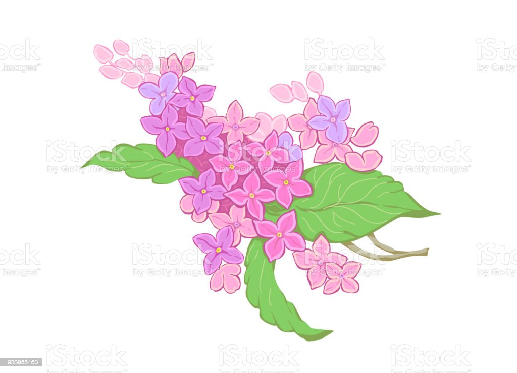 Flores Rama Lila Púrpura Ilustración De Vector Puede Utilizarse Como ...