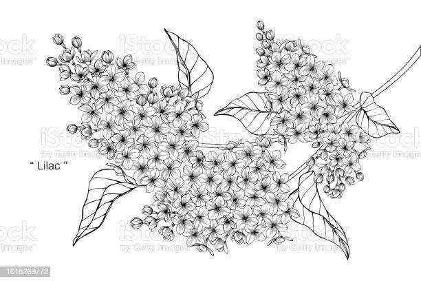 Free wedding flower art Images, Pictures, and Royalty-Free