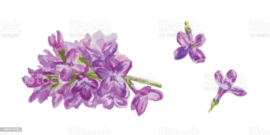 Lilac flowers lilac flowers — стоковая векторная графика и другие изображения на тему Акварельная живопись Стоковая фотография