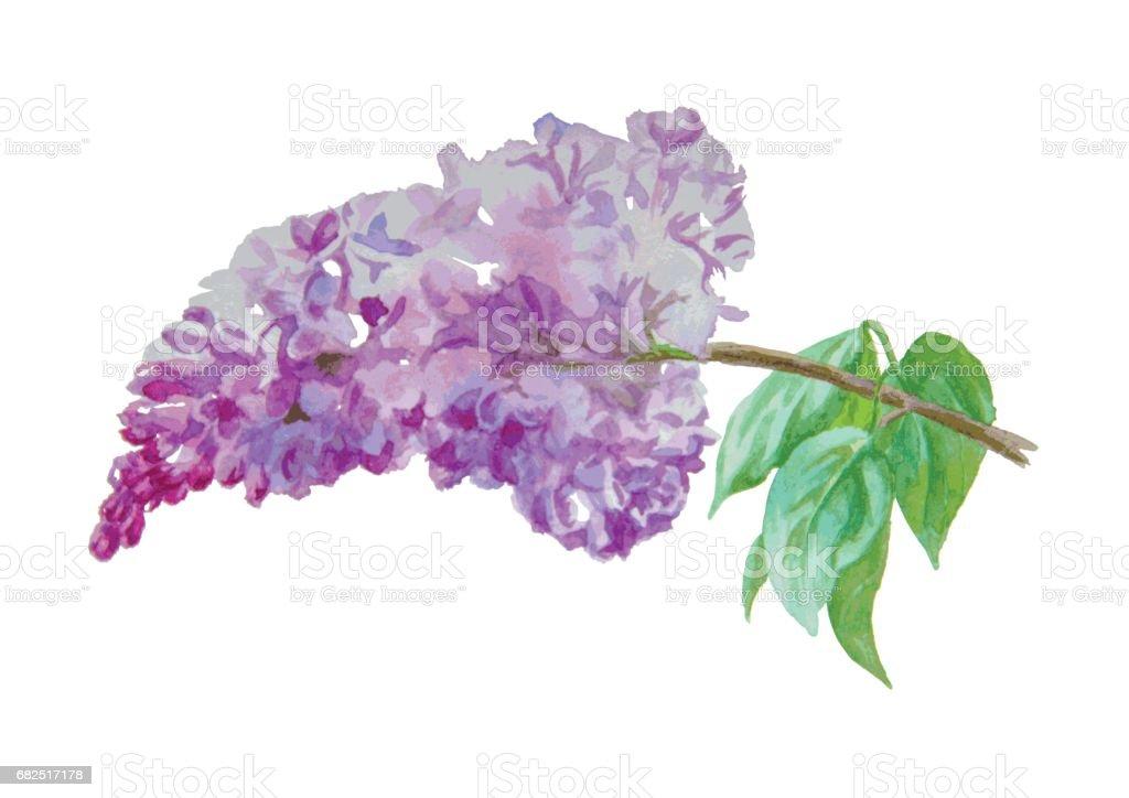 Lilac Lizenzfreies lilac stock vektor art und mehr bilder von aquarell