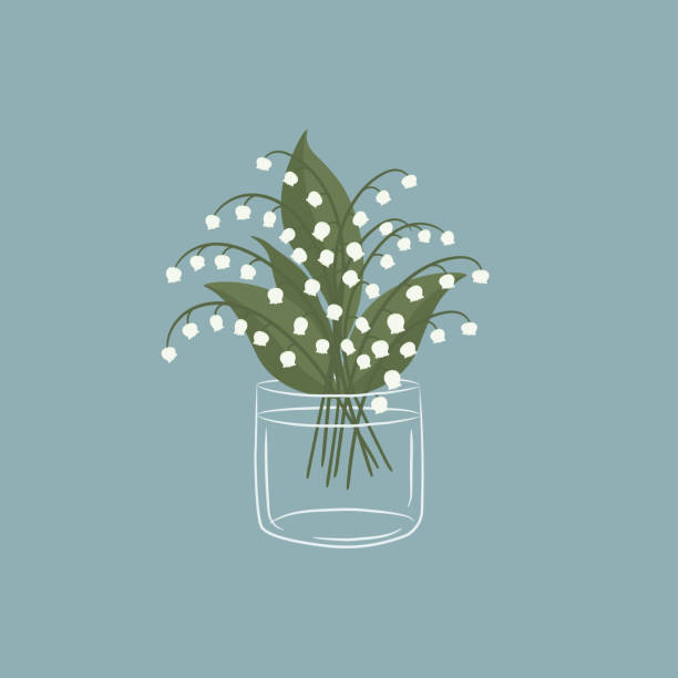 Lilies of the valley in a glass cup. White lilies of the valley with leaves. Spring flowers Lilies of the valley in a glass cup. White lilies of the valley with leaves. Spring flowers. Vector illustration on a blue background. lily of the valley stock illustrations
