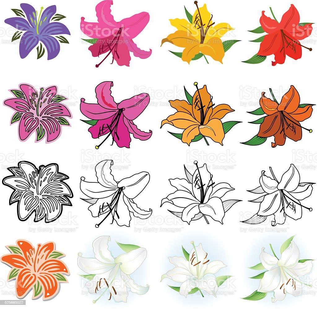 Lirios (estilos diferentes de extracción) - ilustración de arte vectorial