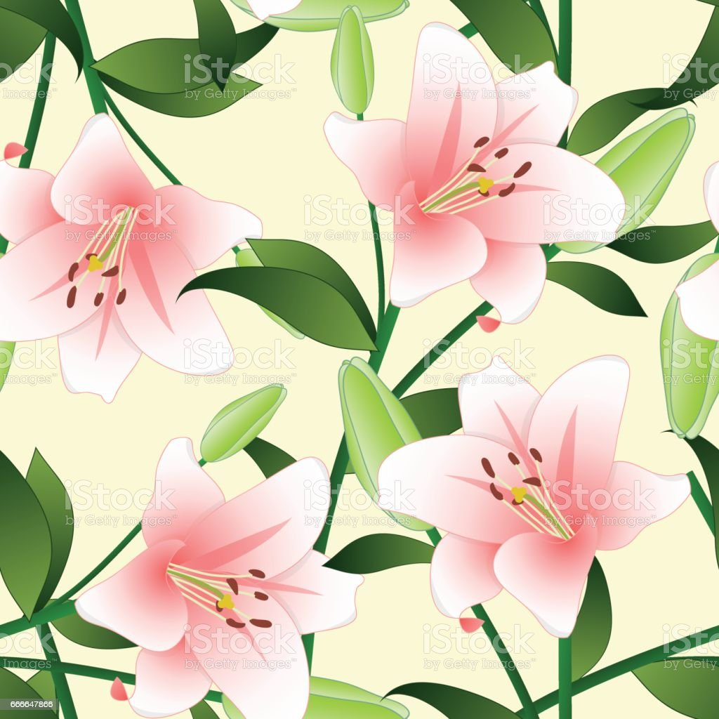 Lilium candidum the madonna lily or pink lily on beige ivory lilium candidum the madonna lily or pink lily on beige ivory background vector illustration izmirmasajfo Gallery