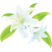 birth flower vector illustration in watercolor paint textures