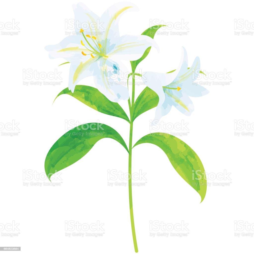 Lily birth flower vector illustration in watercolor paint textures lily birth flower vector illustration in watercolor paint textures royalty free lily birth flower izmirmasajfo