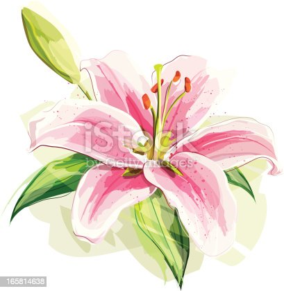 Illustration of a pink lily. Flower and the shadow are grouped and layered separately.