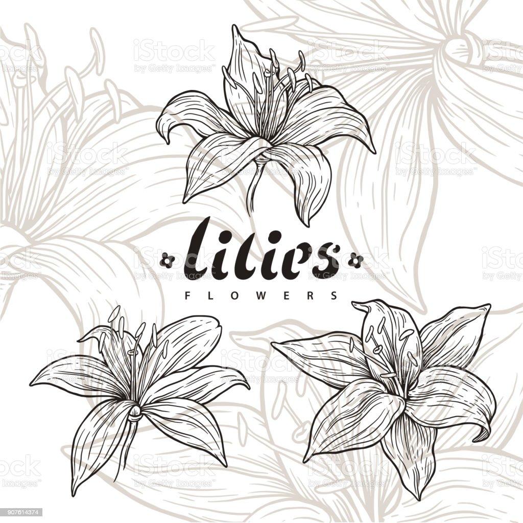 Lily flower vector line art stock vector art more images of art lily flower vector line art royalty free lily flower vector line art stock vector art izmirmasajfo