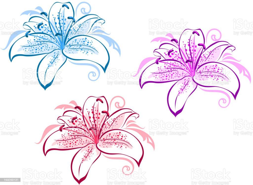 Lily flowers set vector art illustration