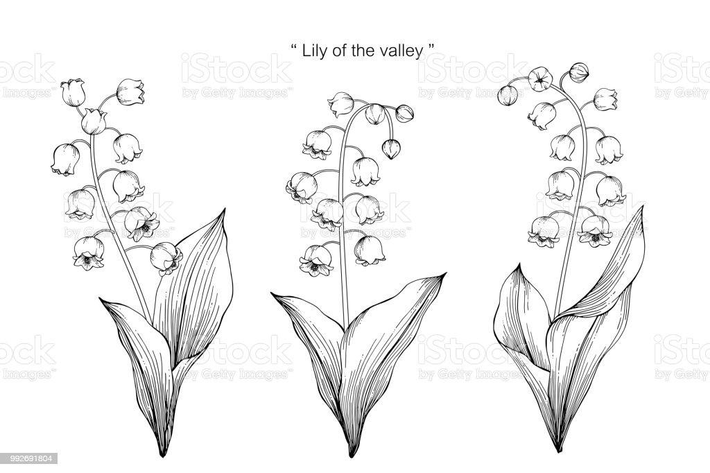 Muguet Fleur Dessin Illustration Noir Et Blanc Avec Dessins Au