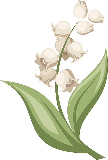 Best Lily Of The Valley Illustrations, Royalty-Free Vector ...