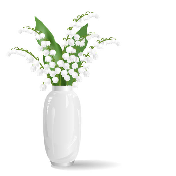 Lily of the valley flowers in white vase, realistic vector illustration. Lily of the valley flowers (may bells, Convallaria majalis) in white vase. Realistic vector illustration isolated on white background. lily of the valley stock illustrations