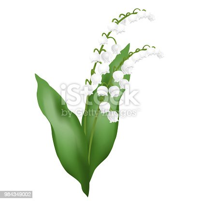 istock Lily of the valley flowers, realistic vector illustration. 984349002