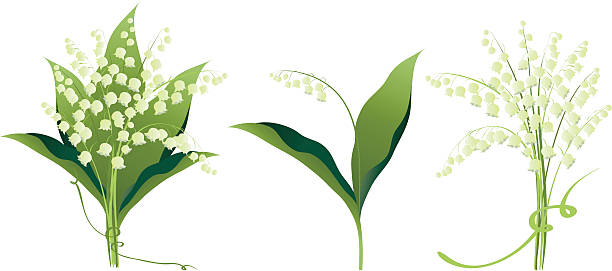 lily of the valley цветы вариантов - four seasons stock illustrations