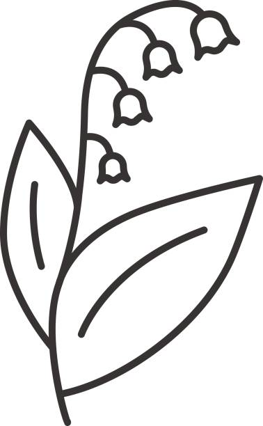 Lily of the valley icon Lily of the valley linear vector icon. Thin line lily of the valley stock illustrations