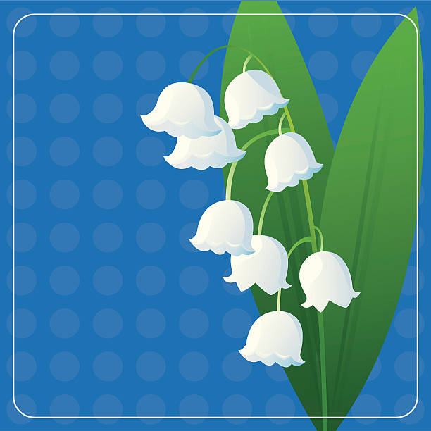 Lily of the Valley A fresh sprig of Lily of the Valley. lily of the valley stock illustrations