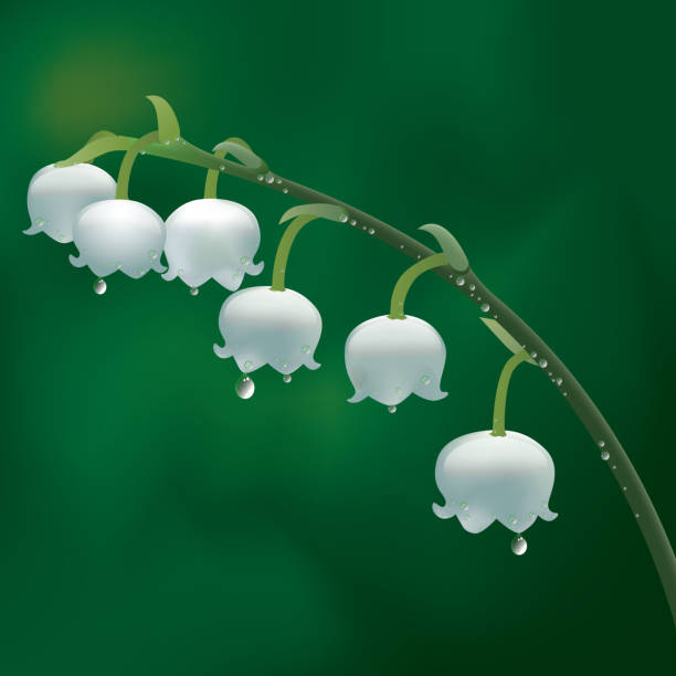 lily of the valley Layer using a transparent effect and mixed mode. lily of the valley stock illustrations