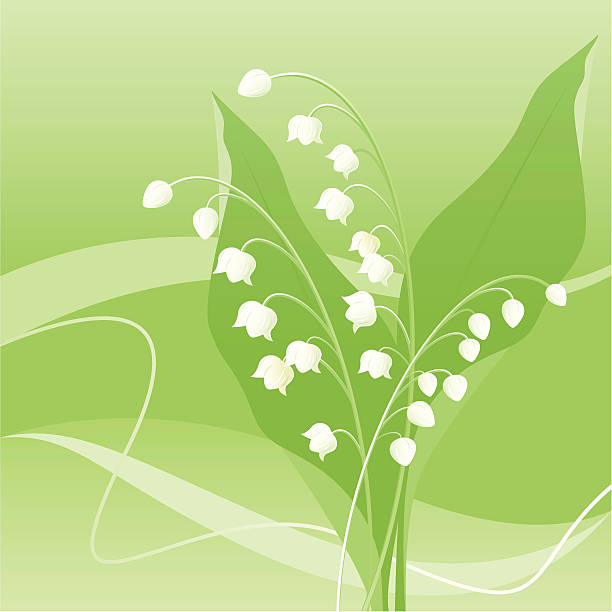 Lily of the valley Lily of the valley on a green background. Zip includes: AI CS3, PDF, 300dpi jpeg. lily of the valley stock illustrations