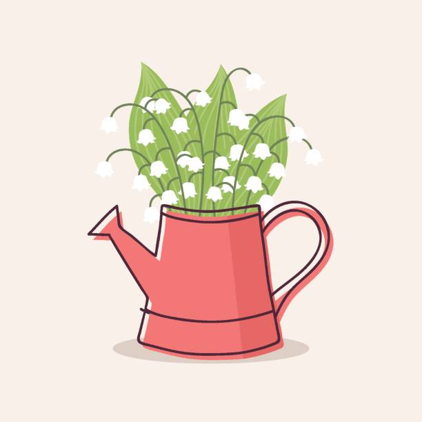 Lily of the Valley Lily of the valley in red watering can, vector illustration. lily of the valley stock illustrations