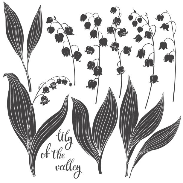 Lily of the valley. Vector illustration, isolated floral elements for design. Silhouette monochrome illustration on white background. Lily of the valley isolated on white background. Black and white vector illustration. lily of the valley stock illustrations