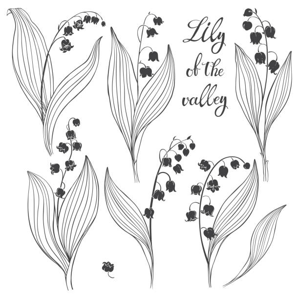 Lily of the valley. Vector illustration, isolated floral elements for design. Monochrome illustration on white background. Lily of the valley isolated on white background. Black and white vector illustration. lily of the valley stock illustrations