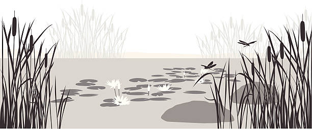lily pond vector silhouette - pond stock illustrations