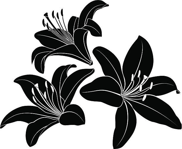 Lily silhouette Vector flowers silhouette.  lily stock illustrations