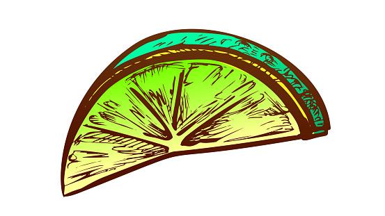 Lime Exotic Citrus Cut Slice Color Vector
