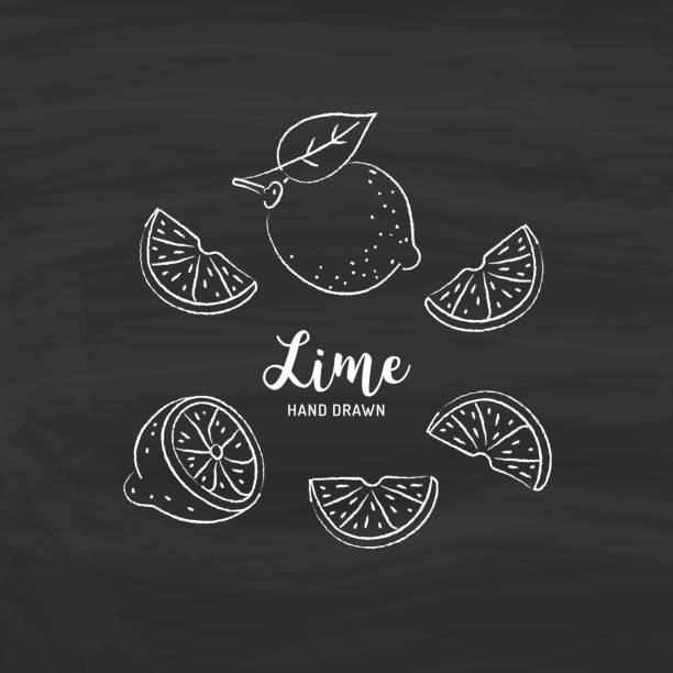 Lime fruit drawing, Half and Slice of Lemon. Sketch of limes with chalk on blackboard. Vector illustration Lime fruit drawing, Half and Slice of Lemon. Sketch of limes with chalk on blackboard. Vector isolated illustration lime stock illustrations
