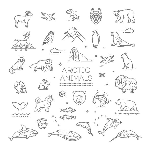ilustrações de stock, clip art, desenhos animados e ícones de line arctic wildlife concept with different north animals . vector - clima polar